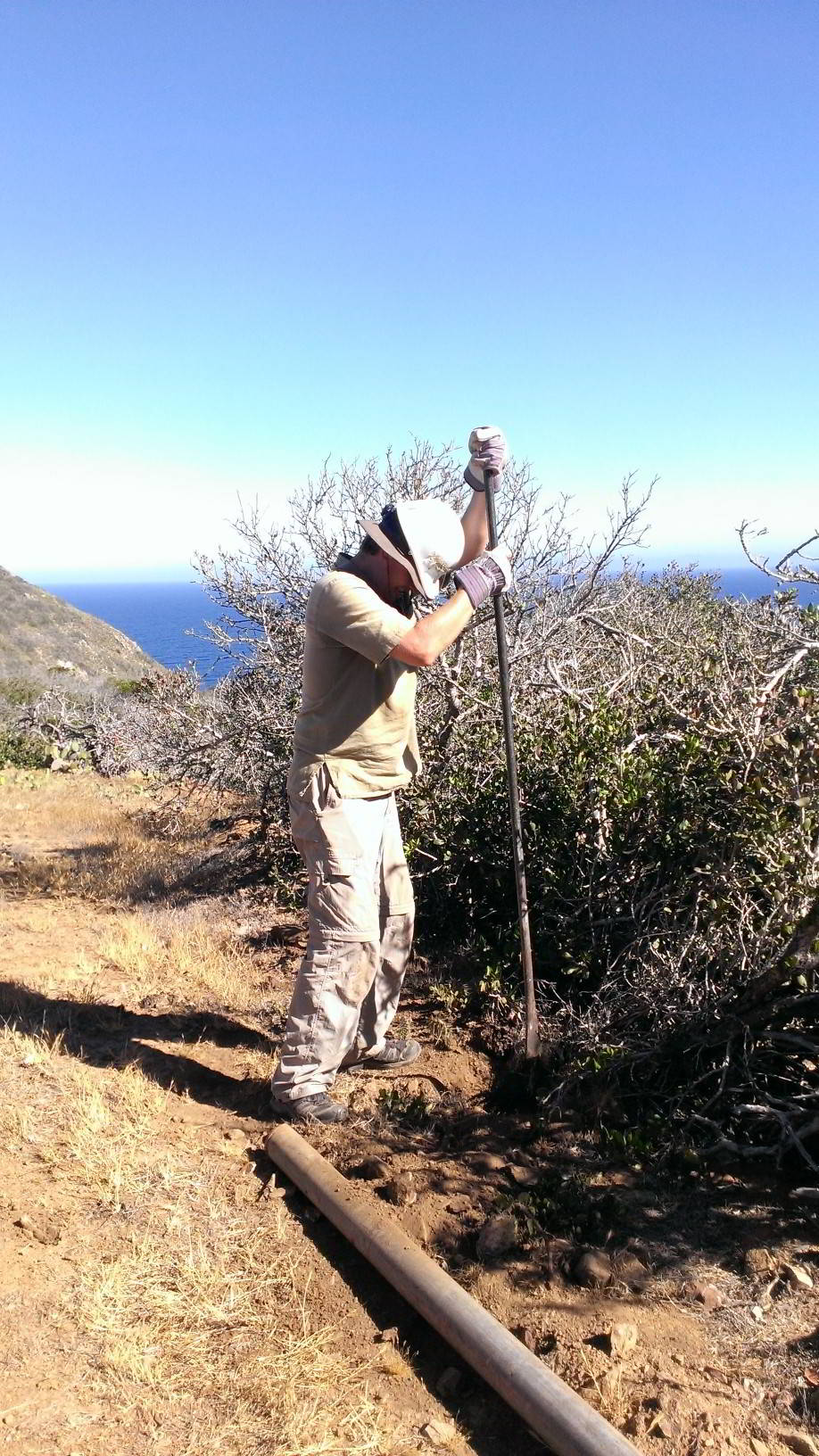 Digging a hole for a fence post, Catalina Island, California
