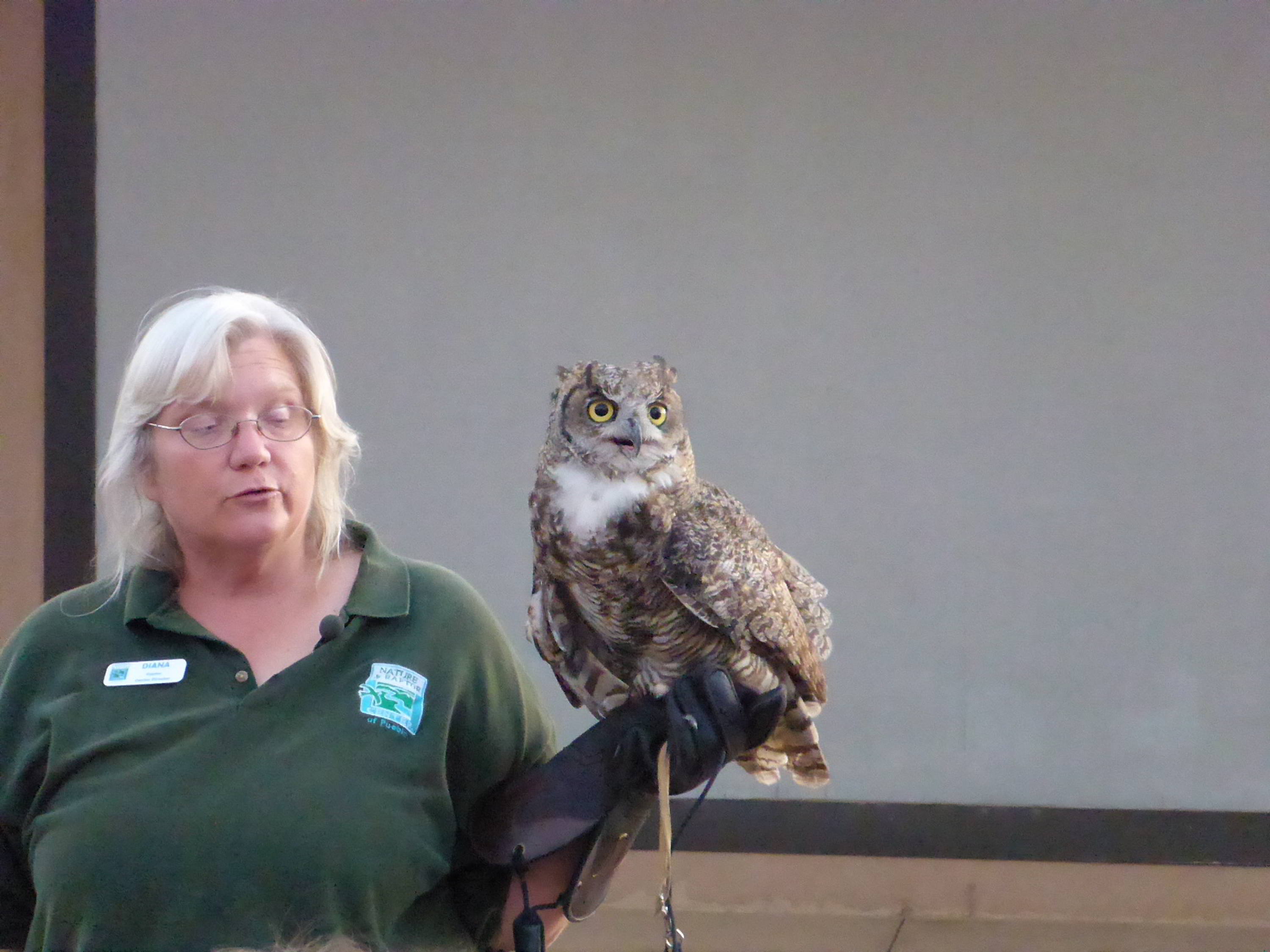 Great Horned Owl  from Nature and Raptor Centre, Pueblo, Colorado